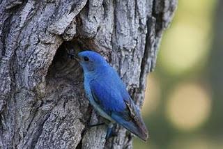 Em busca do pássaro azul…