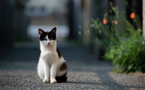 influenciando com o gato